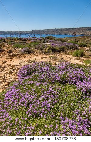 View Over Comino