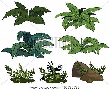 The isolated tropical bushes on a white background