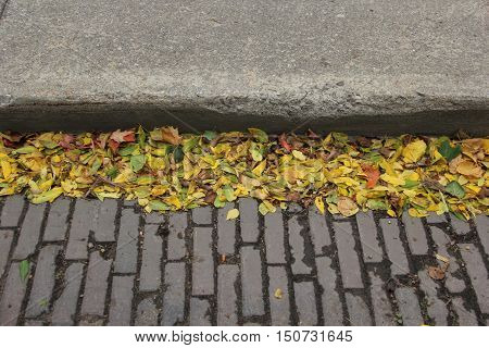 Leaves in fall next to a sidewalk of a street paved with bricks in Traverse City, Michigan