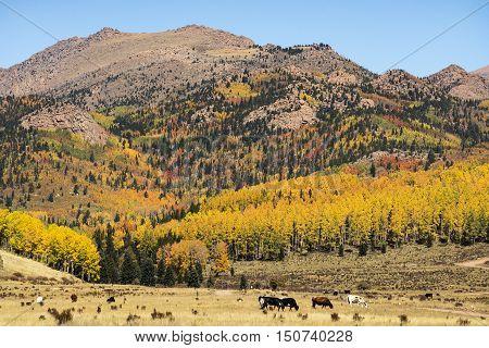 Autumn colors on Pikes Peak near Cripple Creek Colorado