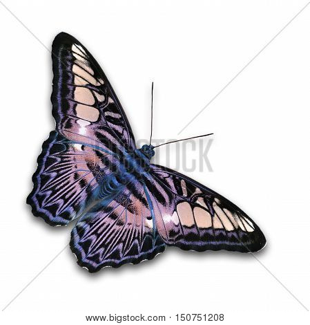 Beautiful Purple Butterfly