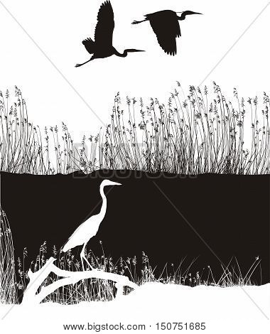 illustration herons on the banks of the river while fishing