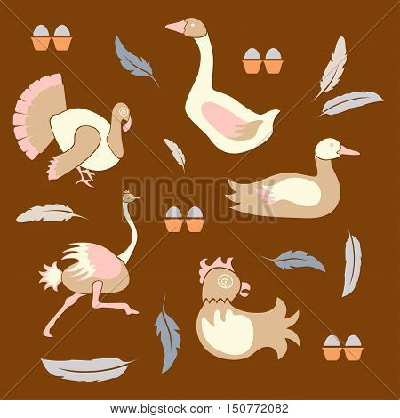 Set of poultry farm birds - chicken, hen, turkey, goose, duck, ostrich icons in modern flat design. Perfect organic farm products banner or flyer. Vector illustration eps10