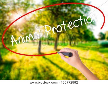 Woman Hand Writing Animal Protection With A Marker Over Transparent Board