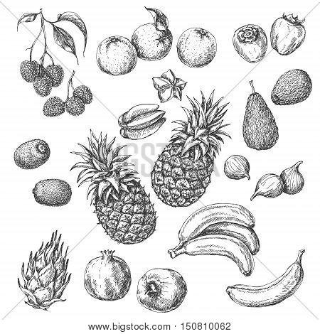 Monochrome Tropical Fruits Set. Hand drawn sketch of lychee pomegranate orange banana dragon fruit fig kiwi fruit persimmon starfruit avocado and pineapple.