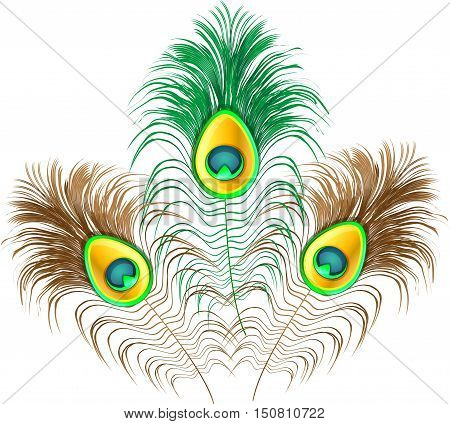 Peacock feather on white background.Vector illustration of colorful peacock plume.