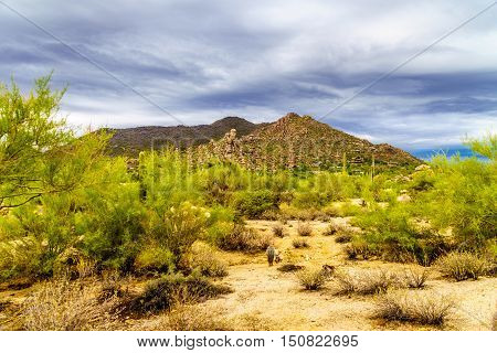 Desert landscape with Boulders and Black Mountain with Cholla Cacti near the town of Carefree in Arizona, United States
