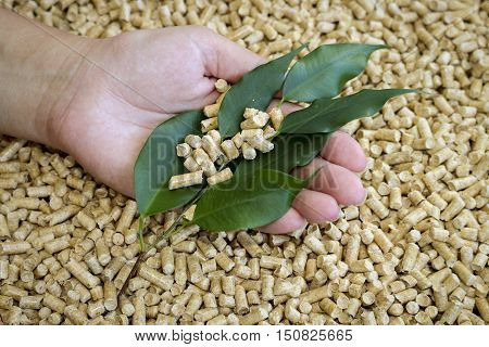 Wood pellets. Biofuels, an alternative biofuels from wood chips and green leaves in a female hand.