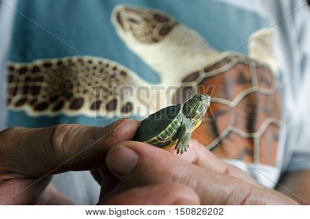 Wildlife-animals-sea-turtle-marine-life