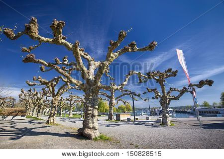 Trees and flowers along the embarkment in the Kreuzlingen city center near Konstanz city with the lake Constance and boats in the background Switzerland.