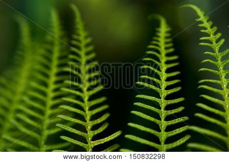 Background photo of Dicksonia Squarrosa New Zealand Fern.