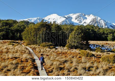 A Woman Hiker Walks Among The Southern Alps.  Bealey Spur, Arthurs Pass National Park, New Zealand