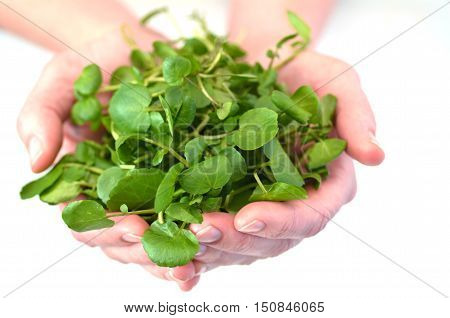 Woman Hands Offering Watercress