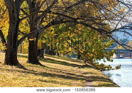 Autumn In Barton Park, Canberra