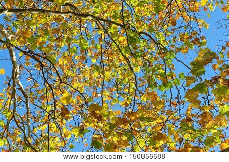 Vivid Autumn Leaves Against Sky On The Background. Fall Foliage