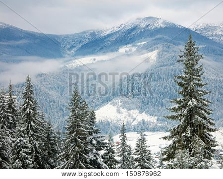 Snowy trees in the mountains
