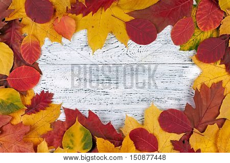 Autumn leaves on white wooden background. Red, yellow and orange autumn leaves