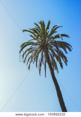 Palm Tree Tropical Vintage Sky Summer Photo Stock