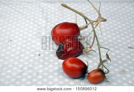 Tomatoes in decay laying on a garden table