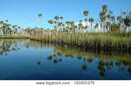 Picture of beautiful natural Florida, with costal water and mirror image of palm trees