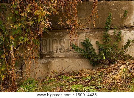 A beautiful autumn landscape. Plants against the wall. Autumn plants. Wilted plants. Autumn background.