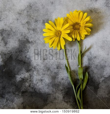 Yellow sunflowers on dark background - condolence card