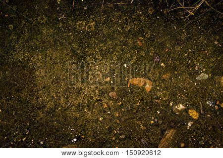 Moss, moss background, fairy tale background, nature background, green background, sidewalk, pavement, road background, concrete background