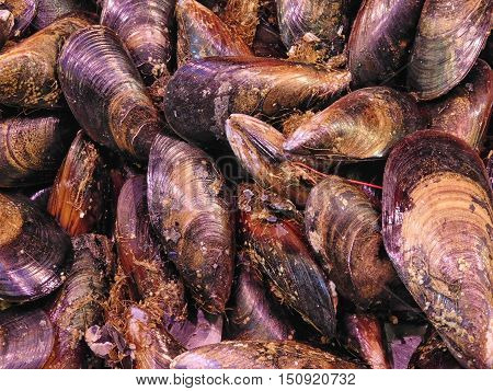 the texture of mussels to eat in the kitchen