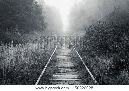 Railway Goes Through Foggy Forest In Morning
