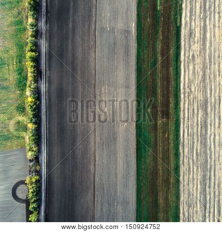 Minimalistic photograph of the beveled field, taken from the air. The concept of pattern from mown field divided by strips of trees. Aerial View