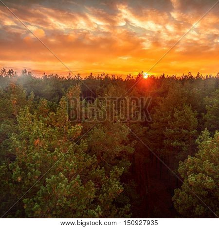 Beautiful panoramic photo of the sunset over the tops of pine forest. Aerial view. From above. Picture taken using the copter.