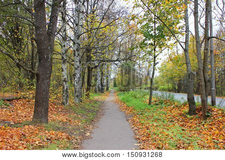 Small route path between trees at the national park. Autumn fall beautiful colorful landscape nature background orange leaves pattern. Outdoor activity, travel, outdoors.