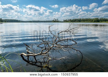Picturesque snag in the water near the shore of the lake a bright Sunny day