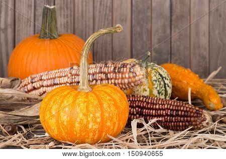 Colorful pumpkins squash and corn on a straw surface with wooden background