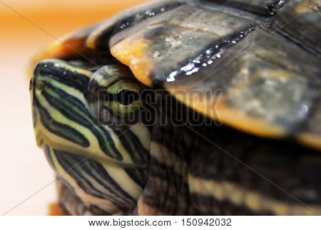 photo shoot turtles at different angles on the floor