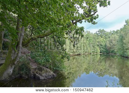 Nature around the lake (beautiful reflections in the water in a natural environment)