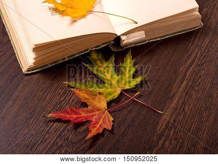 Autumn Concept. Sentimental Poetry
