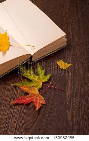 Autumn Background. Autumn Concept