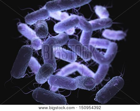 3D illustration of the Enterobacteriaceae that is a large family of Gram-negative bacteria that includes many of the more familiar pathogens, such as Salmonella, Escherichia coli and Yersinia pestis.