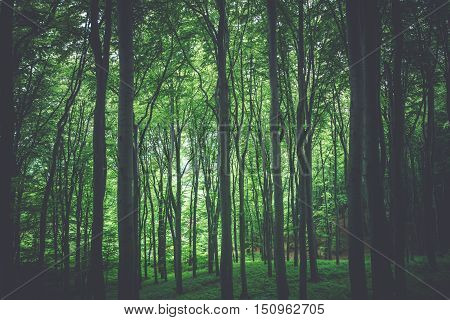 Green Forest Nature Photo Background. Forestry Theme.