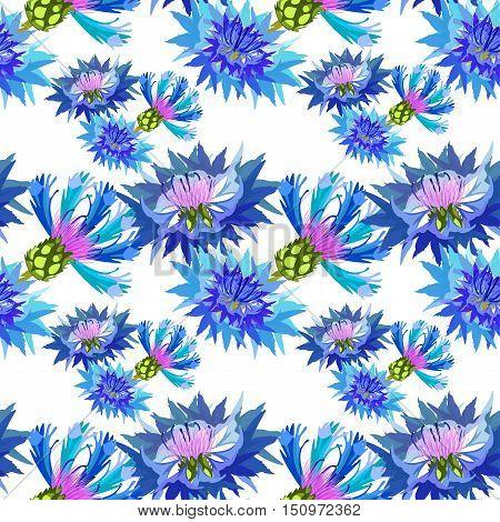 Seamless Pattern Field Flowers Cornflower. Vector Illustration