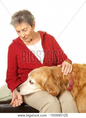 Elderly Woman happy with her pet dog golden retriever.  She is giving him a treat.  Shot on a white background.