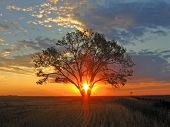 A beautiful sunrise through a lone tree on the open prairie. poster