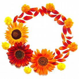 Wreath frame with red sunflowers and marigolds isolated on white background. Petals macro. Greeting card. Flat lay top view. Flowers