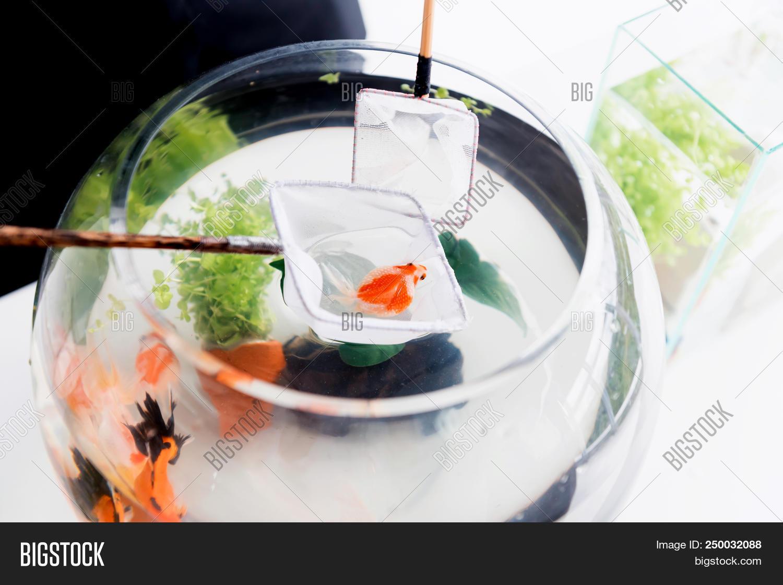 Aquarium Pet Hobby Image Photo Free Trial Bigstock