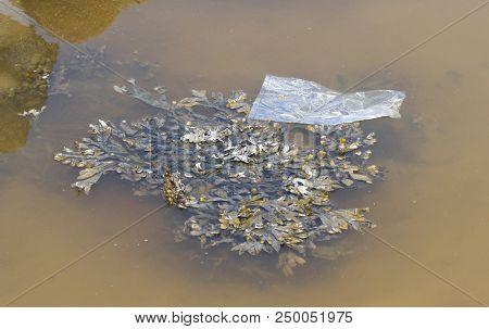 Plastic Drifting In The Waddensea