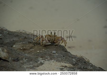 Crab Animal Ocean Sea Crustacean Sand Zanzibar Tanzania poster