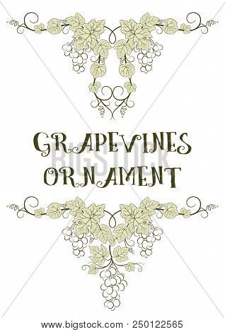 Plant Ornaments, Grape Vines With Berries And Leaves. Vector