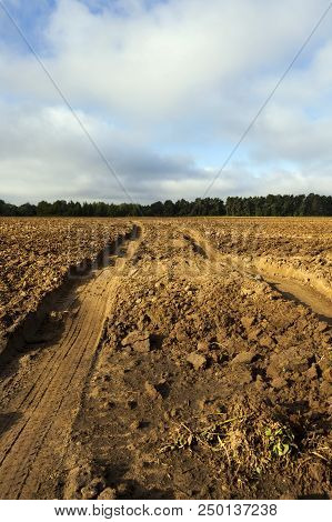 Plowed Soil On The Field On Which It Drove And Left Traces Of A Car, A Large Fall In Autumn