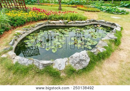 waterlily pond with green lily pads in summer